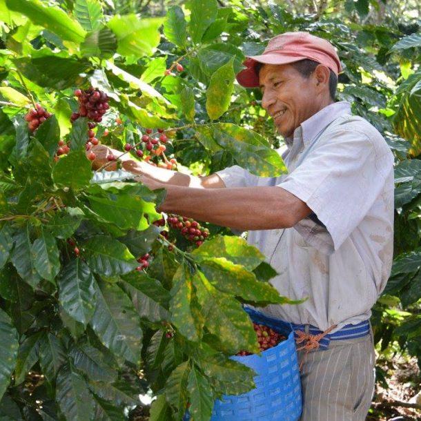 Marcala, Honduras image